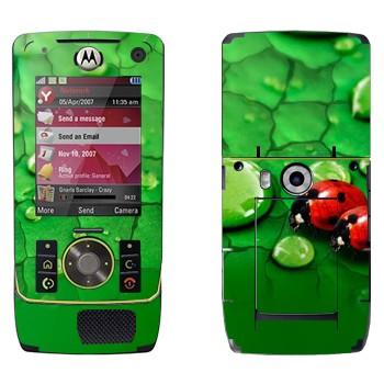 Виниловая наклейка «Божьи коровки на листьях» на телефон Motorola Z8 Rizr